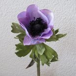 KD Home - Anemone lavender