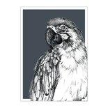 BDdesigns - Card Wildlife Parrot