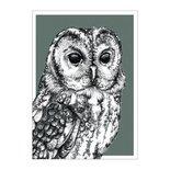 BDdesigns - Card Wildlife Owl