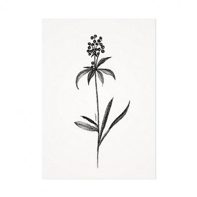 Mélisse - Card The black currant