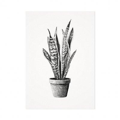 Mélisse - Card The sanseveria