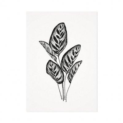 Mélisse - Card The peacock plant