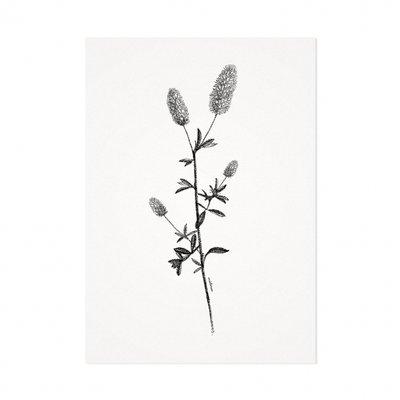 Mélisse - Card The thistle
