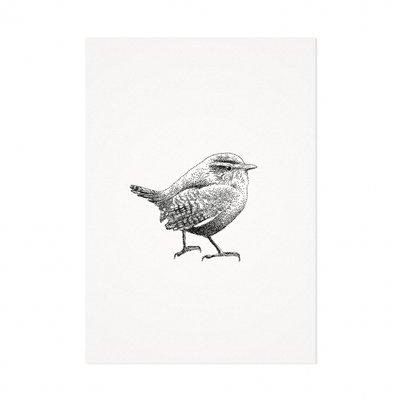 Mélisse - Card The wren