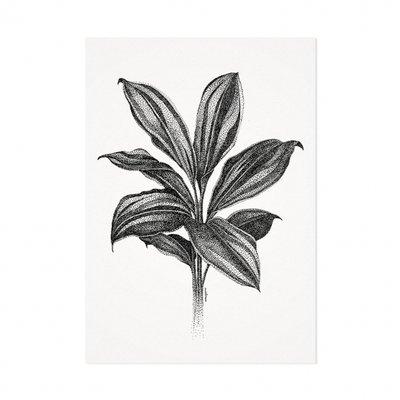 Mélisse - Card The cordyline