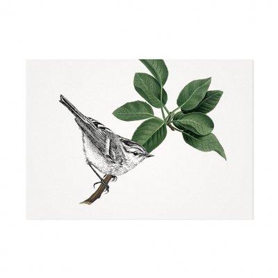 Mélisse - Card The pallas' leaf-warbler