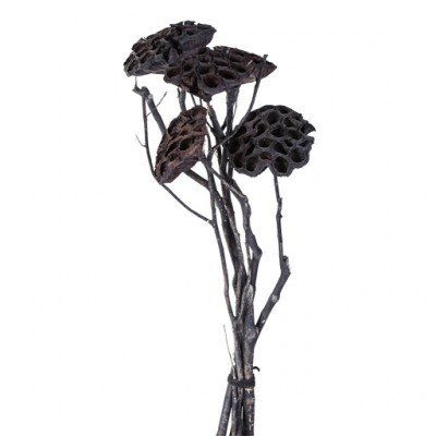 PTMD - Dried flowers black