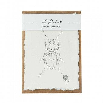 Animaal Amsterdam - Beetle print