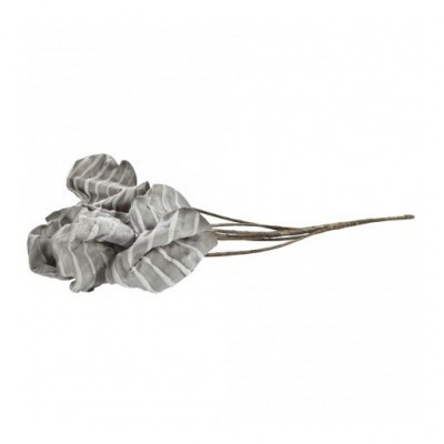 PTMD - Foam Flower Grey leaves calathea