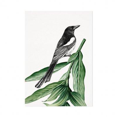 Mélisse - Card The magpie
