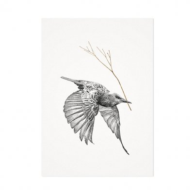 Mélisse - Card The starling