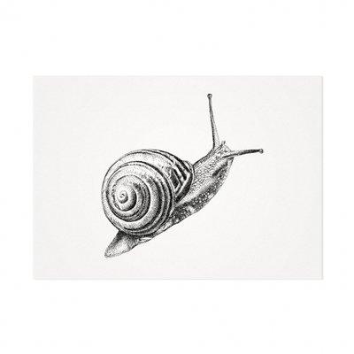 Mélisse - Card The common garden snail