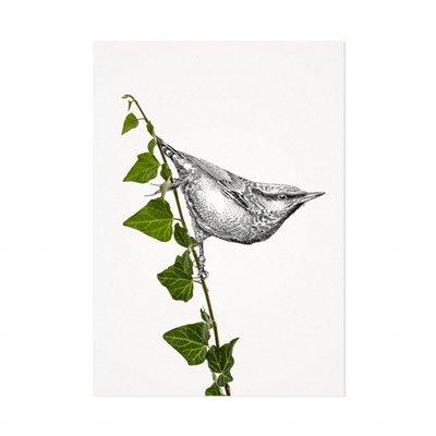 Mélisse - Card The nuthatch