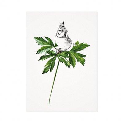 Mélisse - Card The Crested Tit on leaf