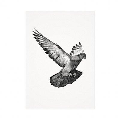 Mélisse - Card The pigeon