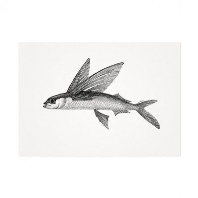Mélisse - Card The Atlantic flying fish