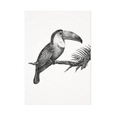 Mélisse - Card The toucan