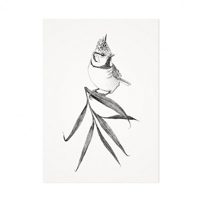 Mélisse - Card The Crested Tit