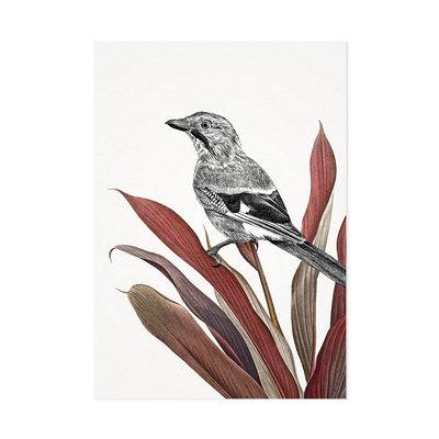 Mélisse - Card The Jay